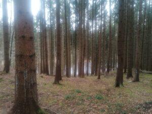 Der Wald um das Waldhaus Deininger Weiher